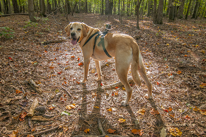Jackson on the Thornburg Trail in the Uwharries with his GoPro camera.