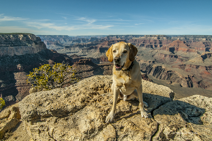 Grand Photo Dog Jackson at the Grand Canyon.