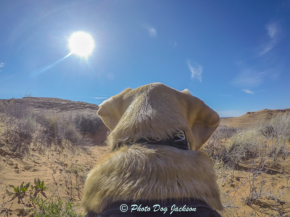 Dreaming about desert hiking!