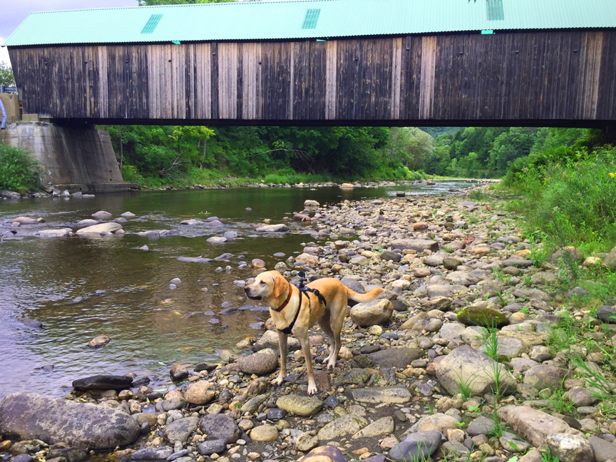 This bridge has a roof, woof!