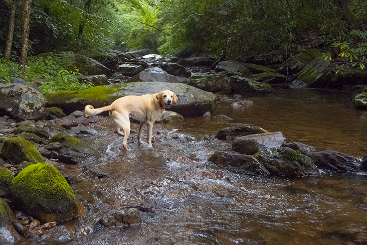 Woof, what I want to do on my next adventure, explore creeks!