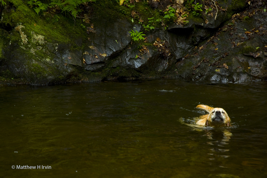 Woof, having fun swimming!